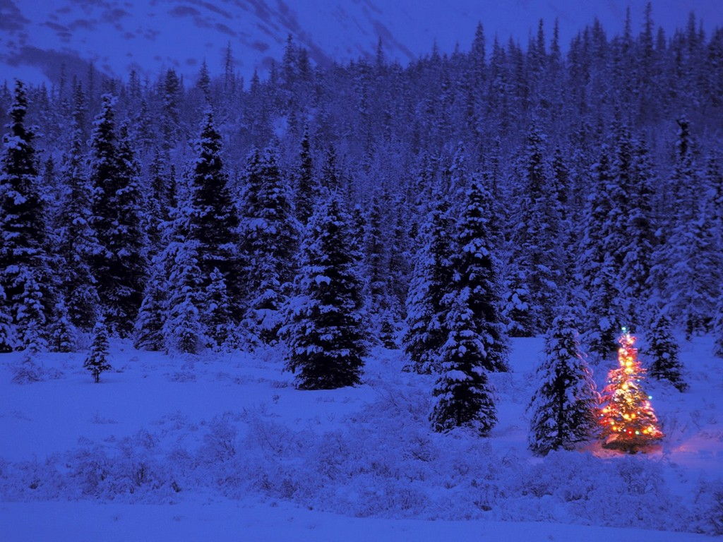 christmas tree gift to kerala xmas wallpapers, free christmas tree wallpapers, christmas lights wallpapers