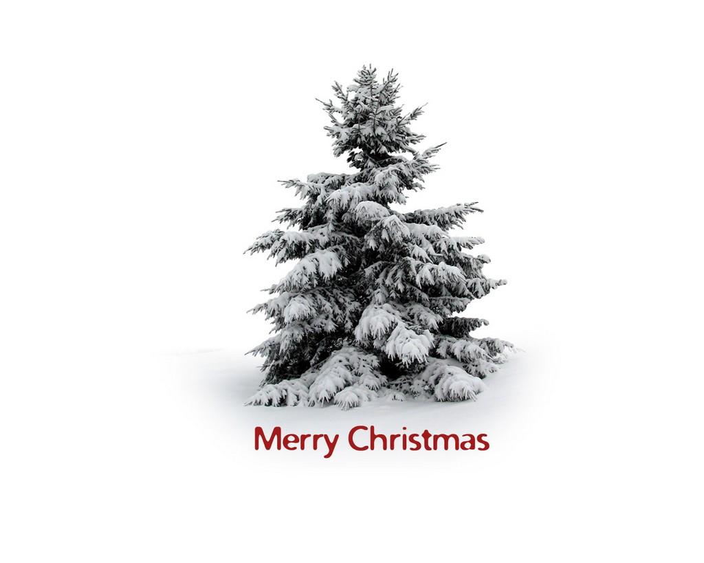 artificial decorated christmas trees, photographs of decorated christmas trees, decorated christmas trees with ribbon