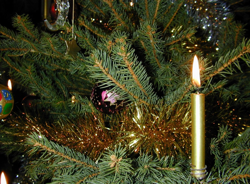 live tabletop christmas trees decorated, pre lit decorated christmas trees